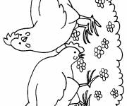 Coloring pages Hens in the garden