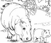 Coloring pages Hippopotamus and its cub
