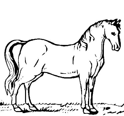 Free coloring and drawings A beautiful horse Coloring page