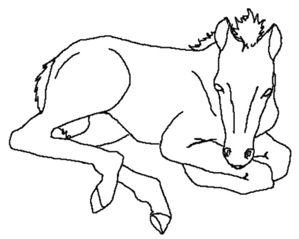 Free coloring and drawings A foal Coloring page