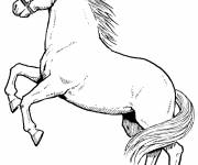 Coloring pages Color prancing horse