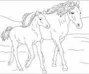 Coloring pages Horse and foal