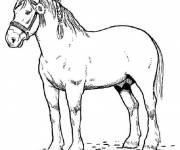 Coloring pages Horse in color