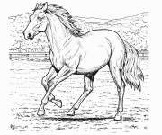 Coloring pages Horse in pencil