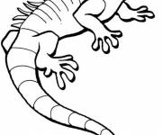 Free coloring and drawings Easy iguana Coloring page