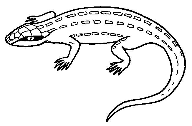 Free coloring and drawings Green iguana Coloring page