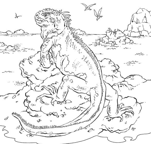 Free coloring and drawings Iguana on an island Coloring page