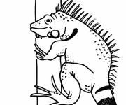 Free coloring and drawings Land iguana Coloring page