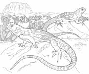 Free coloring and drawings Mexican iguana Coloring page