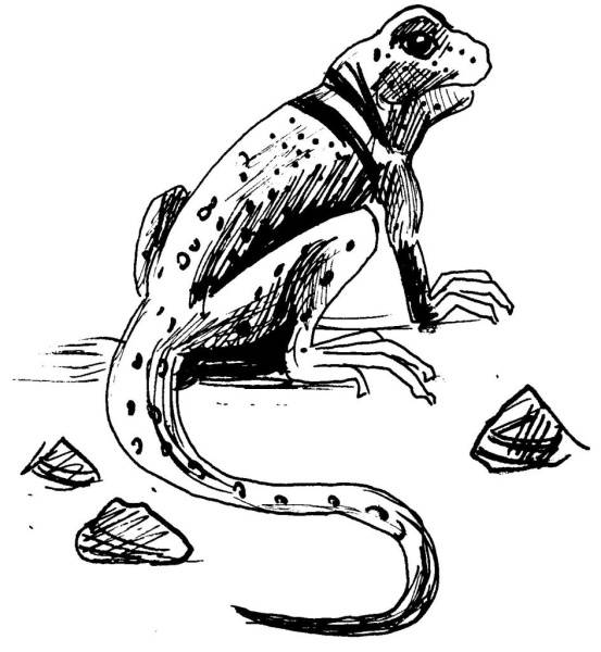 Free coloring and drawings Pencil iguana Coloring page