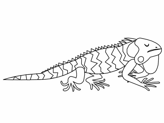 Free coloring and drawings Sleeping iguana Coloring page