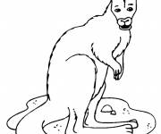 Coloring pages A Kangaroo is watching you
