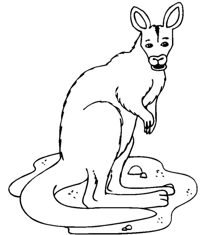 Free coloring and drawings A Kangaroo is watching you Coloring page
