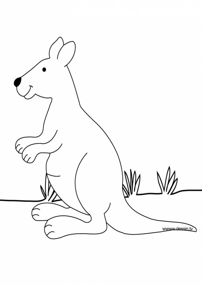 Free coloring and drawings Kangaroo for children Coloring page