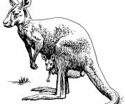 Free coloring and drawings Kangaroo in black pencil Coloring page