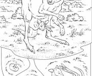 Coloring pages Realistic kangaroo