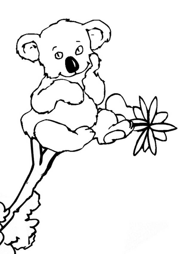 Free coloring and drawings A Koala is watching you Coloring page
