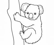 Free coloring and drawings Color koala Coloring page