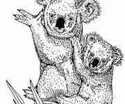 Free coloring and drawings Koala and her cub in pencil Coloring page