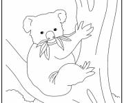 Coloring pages Koala eating on the tree