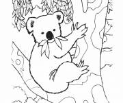 Free coloring and drawings Koala on a tree Coloring page