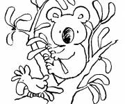 Free coloring and drawings Small Koala on tree branches Coloring page