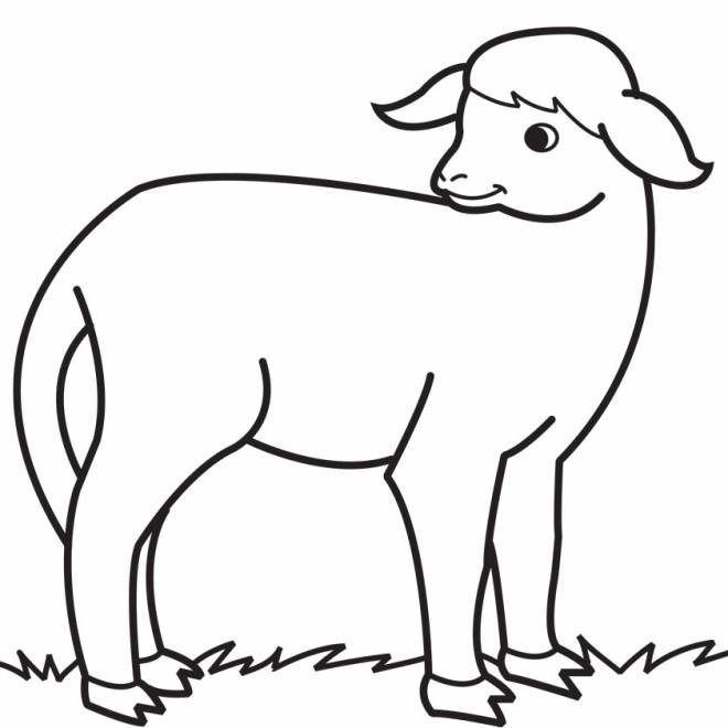 Free coloring and drawings Easy drawing lamb Coloring page