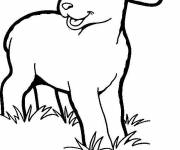 Coloring pages Lamb