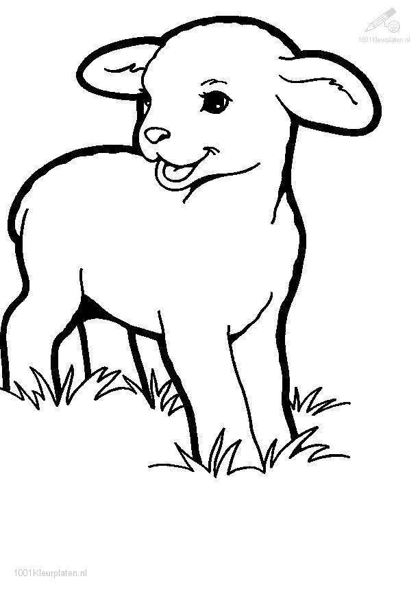 Free coloring and drawings Easy lamb Coloring page