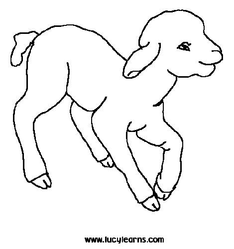 Free coloring and drawings Lamb for children Coloring page
