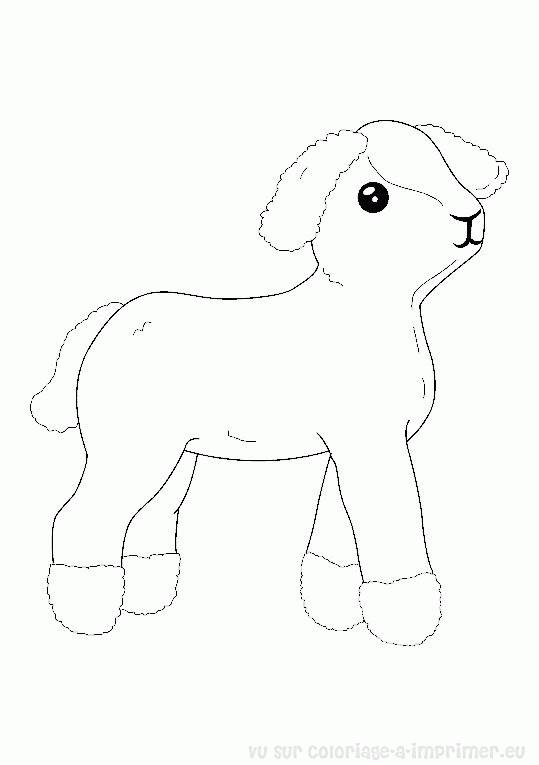 Free coloring and drawings Lamb in black and white Coloring page