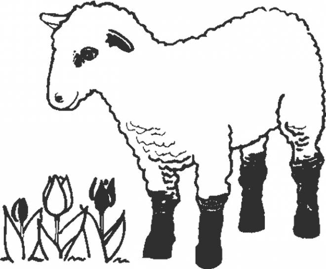 Free coloring and drawings Lamb online Coloring page