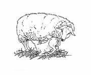 Free coloring and drawings Young lamb cared for by its mother Coloring page