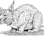 Free coloring and drawings Attentive lynx Coloring page