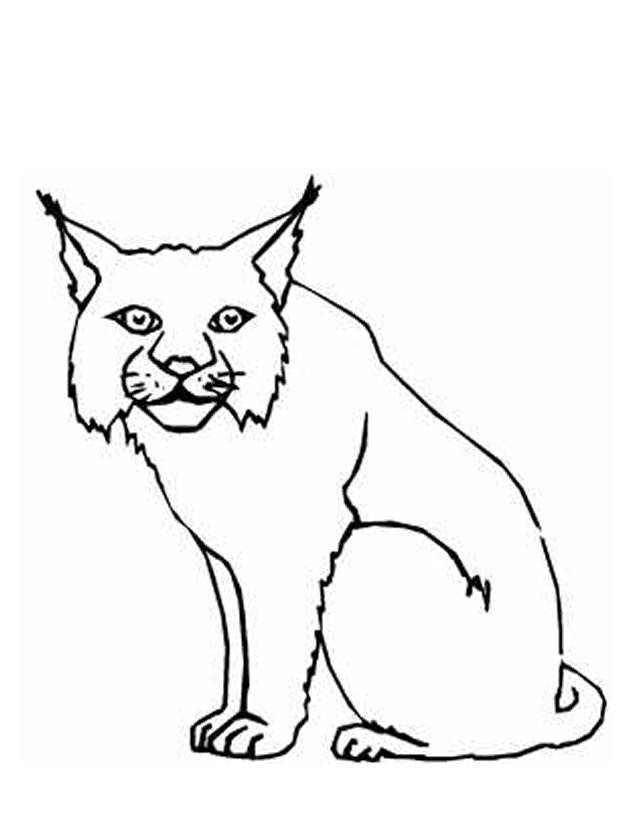 Free coloring and drawings Easy Lynx Coloring page