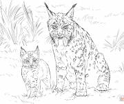 Free coloring and drawings Lynx and her baby Coloring page
