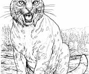 Free coloring and drawings Lynx image Coloring page