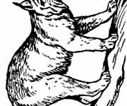 Free coloring and drawings Lynx in pencil Coloring page