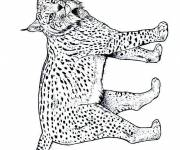 Free coloring and drawings Maternal lynx Coloring page