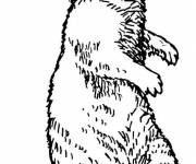 Coloring pages Groundhog in pencil