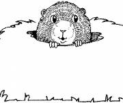 Coloring pages Groundhog sticks out its head