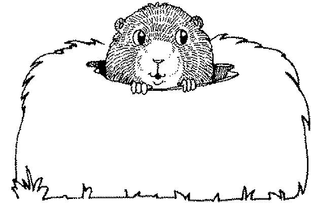 Free coloring and drawings Groundhog sticks out its head Coloring page