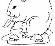 Free coloring and drawings Marmotte many Coloring page