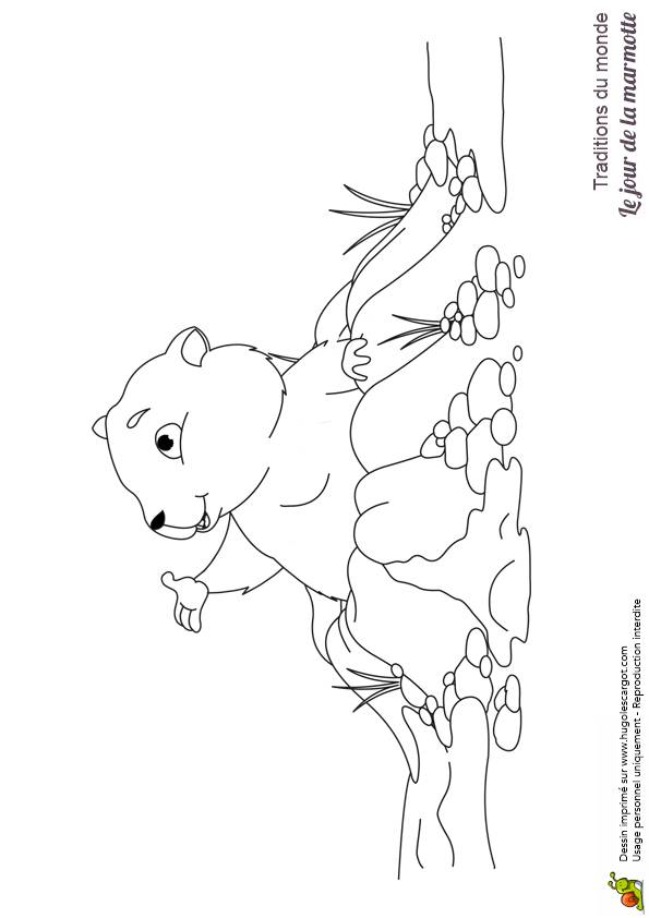 Free coloring and drawings Mountain marmot Coloring page