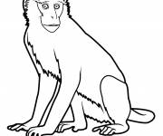 Coloring pages Guenon