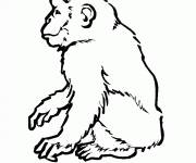 Coloring pages Monkey black and white drawing