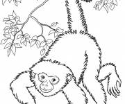 Coloring pages Realistic monkey