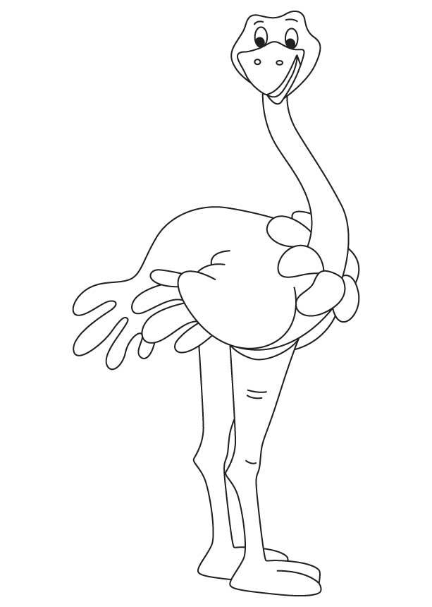Free coloring and drawings A smiling ostrich simple Coloring page
