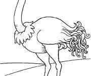 Free coloring and drawings Adult ostrich Coloring page
