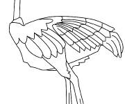 Coloring pages African ostrich